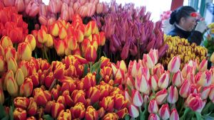 Pike Place Market Photos-Flowers 1.jpg