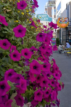 Pike Place Market Photos-Flowers 8.jpg